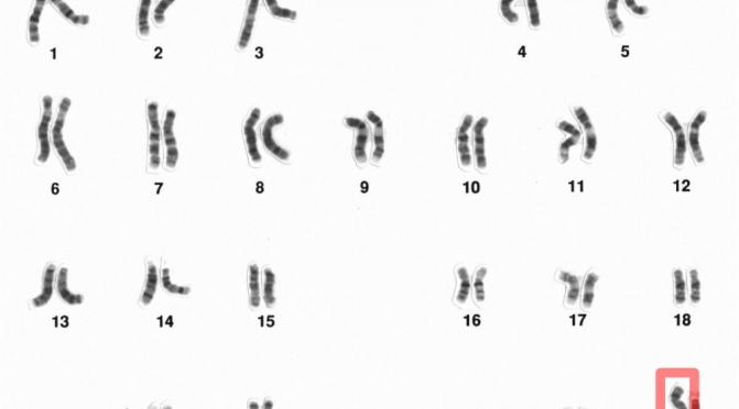 X Chromosomes (per Wikipedia)